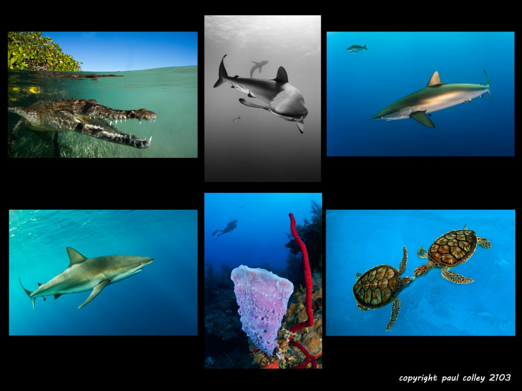 Cuban waters brim with life: sharks, crocs, turtles & colourful sponges