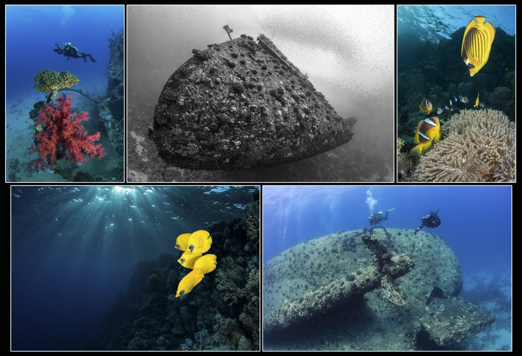 Southern Red Sea wrecks & marine life