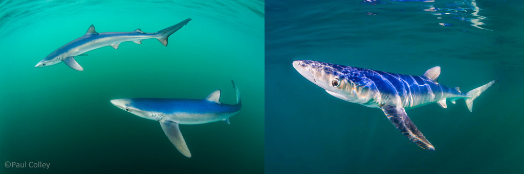 Winner BWPA Coast & Marine and Highly Commended BWPA Animal Portraits